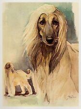 Vintage Afghan Hound Dog Print Gallery Wall Art Beautiful Pet Art Print 2909