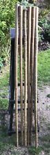 Hazel Walking Stick Shanks.