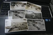 PORTH DEAD SEAL   120 X 70  mm b&W original photograph SH SMITH  SEVEN ITEMS LOT