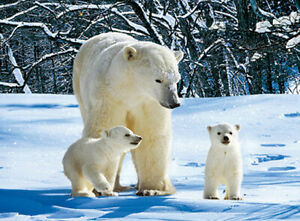 POLAR BEARS MOTHER AND BABIES - 3D POLAR BEAR PICTURE 400mm X 300mm (NEW)