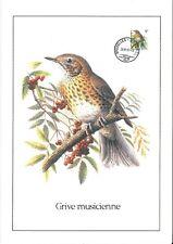 FDC 2426 - Oiseau Buzin sur gravure format A4 !