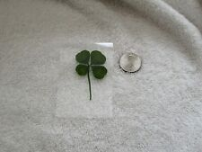Real Four Leaf Clover–Gifts Under 10- Laminated 4 Leaf Clover- Spring Gift