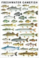 Freshwater Gamefish of North America by Joseph R. Tomelleri Poster 24x36
