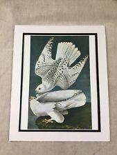 1964 Vintage Print Icelandic Jer Falcon Audubon's Book of Birds of America LARGE