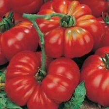 VEGETABLE TOMATO MARMANDE SUPERPRECOCE 240 ITALIAN SEEDS