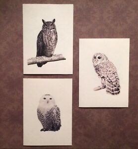 Set of 12 Handmade Blank Owl Print Note Cards Great Horned, Barred, Snowy Owls