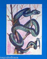 ANIMALI - Lampo 1964 - Figurina-Sticker n. 285 - COBRA CIPO -New
