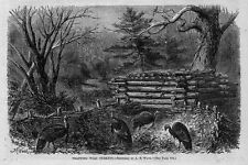 HUNTING TRAPPING WILD TURKEY ANTIQUE ENGRAVING VINTAGE WILD TURKEY HUNT TRAP