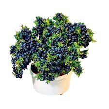 100pcs Blueberry Seeds Garden Edible Fruit Bonsai Plant Indoor Outdoor Available