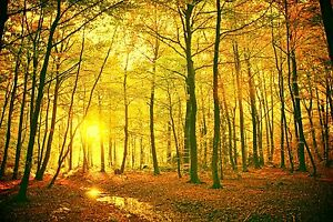 LARGE  AUTUMN FOREST LEAVES TREES PHOTO PICTURE ART PRINT PREMIUM POSTER