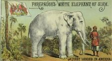 1880's Adam Forepaugh's Circus, White Elephant of Siam Trade Card P113