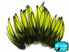 1 Dozen - Fl. Yellow BLW Whiting Laced Hen Cape Loose Feather Fly Tying Supply