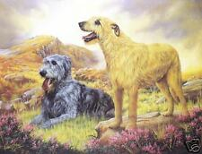 Irish Wolfhound limited edition print by Robert J. May