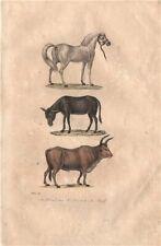 FARM ANIMALS. Cheval [Horse]. Ane [Donkey]. Boeuf [Oxen]. BUFFON 1837 print