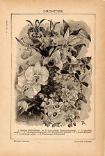 Stampa antica fiori ORCHIDEA Cattleya Cypripedium Oncidium 1910 Antique print