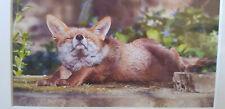 Fox - art photograph