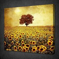 STUNNING SUNFLOWERS FIELD TREE CANVAS WALL ART PICTURE PRINT READY TO HANG