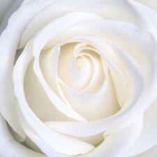 'Rosa bianca quadro - Stampa d''arte su tela telaio in legno'