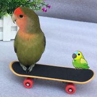 LN_ FT- Pet Bird Parrot Sliding Toys Skateboard Cockatiel Exercise Bite Climb