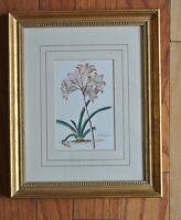 Vintage Gold Wood Frame with Print of Belladona Flower
