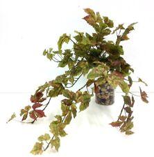 "Garden Ivy Greenery Hanging Bush~Green,Burgundy Accent~24"""
