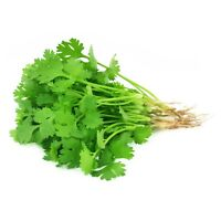 Herb Coriander Herb Seeds,Coriander Seeds, Herb Cilantro Herb Seeds 1500 Approx