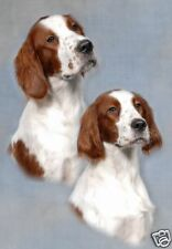 Irish Red & White Setter A6 Blank Card No 4 - Starprint