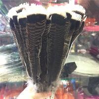 Wholesale unique wild Turkey tail feathers 4-12 inches / 10-30 cm 10-100pcs