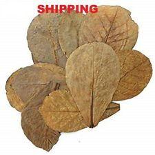 GIANT CATAPPA KETAPANG INDIAN ALMOND LEAF 150g - 1200g FISH TANK BETTA DISCUS