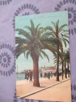 CPA 06 - Cannes. Le Mont Chevalier à Travers les Palmiers.