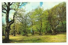 In the New Forest, Hampshire postcard