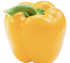25 Seeds Yellow Bell Peppers Pimiento Amarillo USA SELLER 🇺🇸