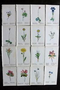 Weber 1880 Lot of 16 Hand Col Botanical Prints. Book Plates