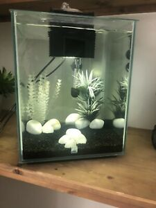 Fluval Chi 19L Glass Aquarium Fish Tank Kit with Filter Light- ONLY 1 MONTH OLD