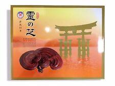 Hsu's Japanese Reish Mushroom - Reish - 120 Capsules