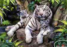 """Jigsaw Puzzle 1000 Pieces """"White tiger family"""" / Puzzle LIfe"""