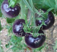 🔥 🍅 blaue Tomate 10 Samen SEHR SELTEN Tomaten für Balkon Kübel TOLLES GESCHENK