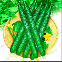 100 PCS Seeds Long Cucumber Bonsai Chinese Plants Vegetable Plantation Garden G