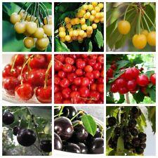10/20Cherry Fruit Seeds Cerasus Tasty Garden Perennial Sweet Plants Fresh Red