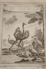 GRAVURE AFRIQUE OISEAUX AUTRUCHE PELICAN SPATULE OISEAU DE PARADIS COCHIN 1747