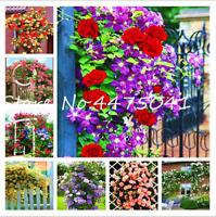 200 PCS Seeds Climbing Rose Bonsai Flowers Perennial Plants Free Shipping 2019 N