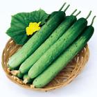 Korean Cucumber Seeds 50pcs Vegetable Kimchi Pickled In Salt Gentle Soft Taste