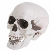 Fake Skull Home Decoration Punk Design Plastic Realistic Scary Horror Skeleton