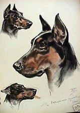 Doberman Pinscher Study Vintage Dog Large Print 1944 Diana Thorne