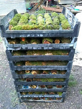Greenhouse Grown Terrarium Moss Logs not wild collected!