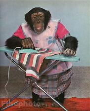 1959 Vintage MONKEY HUMOR Chimpanzee DOMESTIC HOUSEWIFE LAUNDRY Animal Photo Art