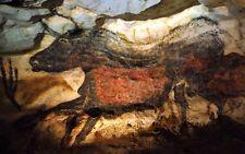 Beasts : Lascaux Cave Painting :   Art Print