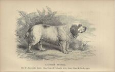 1886 Engraving Named Dog Print + Chapter Uk Dalziel British Dogs Clumber Spaniel