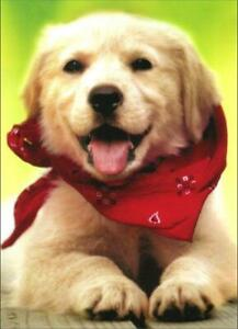 Thank You Greeting Card - Dog with Scarf