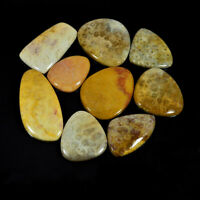 399Cts. Natural Fossil Coral 09Pcs fancy Shape Cabochon Loose Gemstone Lot w543